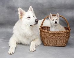 Hund kaufen