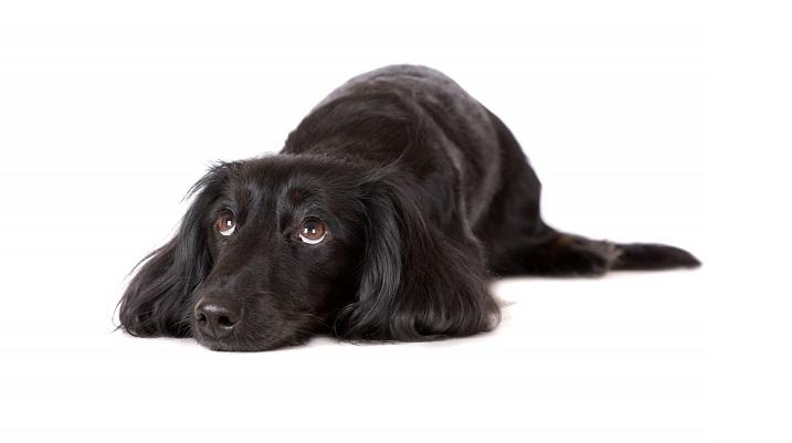 Hundeanschaffung