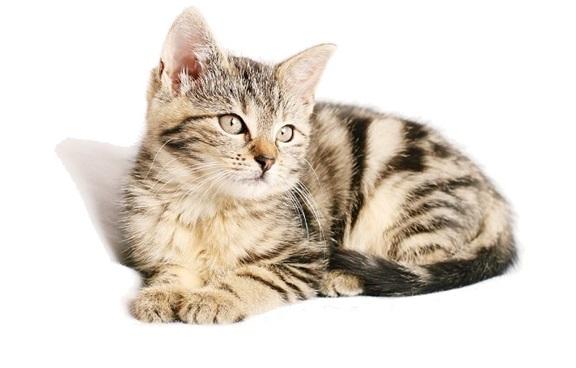 Katzenanschaffung